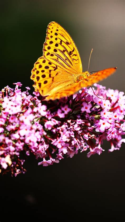 butterfly spring blossom wallpapers hd wallpapers id