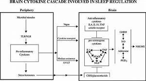 Cytokine Networks Are Involved In Sleep Regulation  A