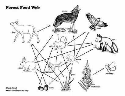 Webs Keystone Species Chains Complex Activity Teach