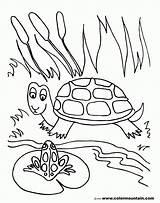 Pond Coloring Pages Frog Turtle Drawing Lily Pad Fish Sheet Habitat Printable Print Sea Drawings Preschoolers Getdrawings Animals Getcolorings Sit sketch template