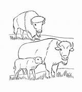 Bison Coloring Pages Printable sketch template