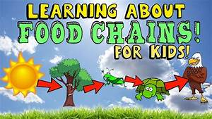 Learning About Food Chain For Kids With Pictures And