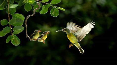Beautiful Birds hd Wallpapers Colorful hq Desktop Images