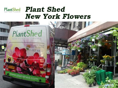 plant shed nyc plant shed new york flowers nyc florists