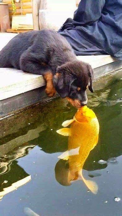 puppy kissing fish luvbat