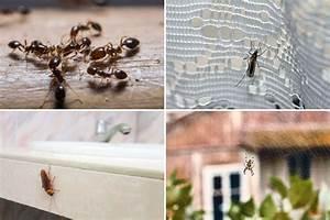 Kakerlaken Im Garten : ameisen co so bek mpfen sie ungeziefer im gartenhaus ~ Whattoseeinmadrid.com Haus und Dekorationen