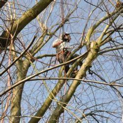 Bäume Schneiden Wann Erlaubt : b ume schneiden und f llen nur noch bis sonntag erlaubt ~ A.2002-acura-tl-radio.info Haus und Dekorationen