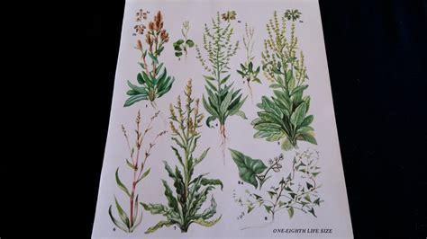 Herbs Vintage Botanical Print Antique Plant Print Botanical