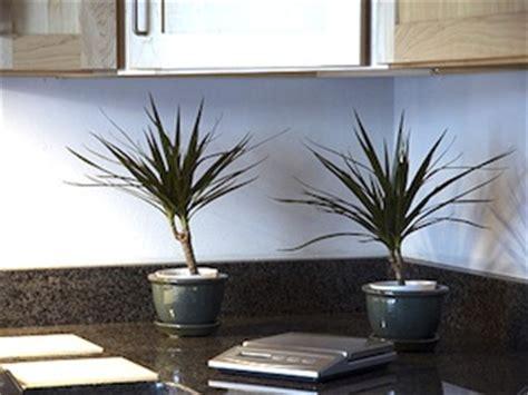 plante pour cuisine une plante pour chaque pièce