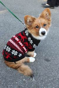 Ugly Xmas Sweaters For Dogs