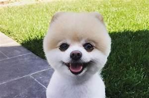 https://www.thepaws.net/wp-content/uploads/2018/10/cute-pomeranian-haircut.jpg - photo#22