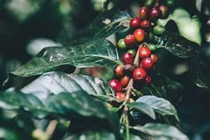 Biologische koffie, wat is het en wat is het voordeel ...