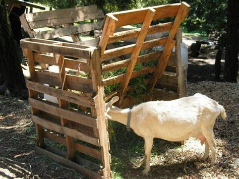 goat hay rack hay rack out of pallets goats pallets and hay