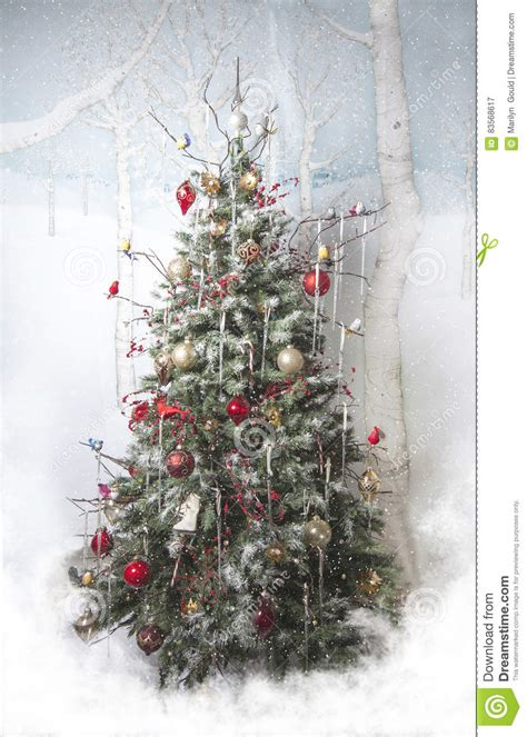 christmas tree stock image image  marilyn snow