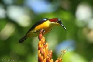 Gambar burung paling langka asli indonesia. Daftar Nama Nama Burung Langka Di Indonesia Lengkap Dengan Gambarnya | Nama-Nama Hewan