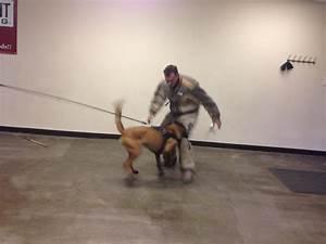 Precision k9 work protection training for Precision dog training