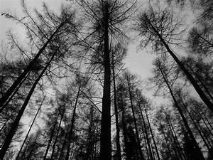 eleletsitz: Tumblr Vintage Black And White Photography Images