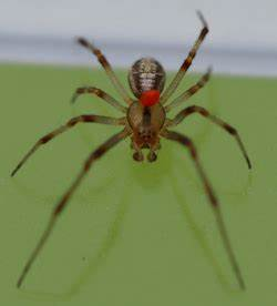 Was Machen Milben : milben in der kche get rid of bed bugs wird flohspray ~ Lizthompson.info Haus und Dekorationen