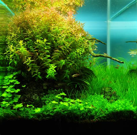 What Is Aquascaping by Aquascaping Grifon Quality Test Results Dennerle Nano