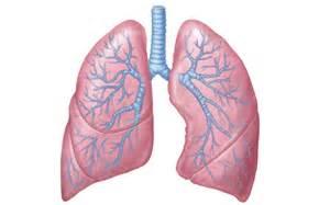 chvrches lungs lyrics genius lyrics