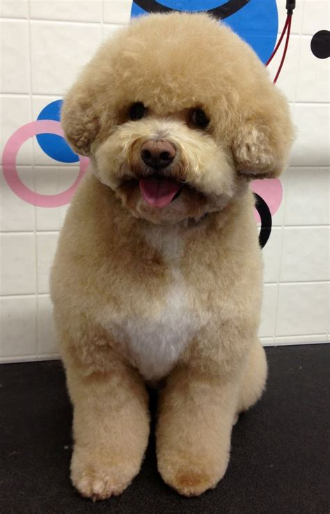 best grooming cuteness bow wow shoppe san diego ca http www