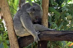 Im Sitzen Schlafen : im sitzen schlafen so klappt es ~ Watch28wear.com Haus und Dekorationen