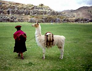 An Inca Lady With Her Llama In Transport