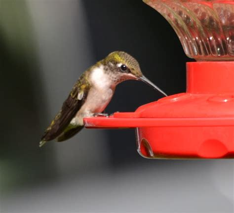growing days on stephen king and hummingbirds