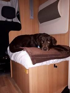 Vermieter Verbietet Hund : wohnmobil mieten mit hund reisemobil mit tier bei ~ Lizthompson.info Haus und Dekorationen