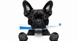 Laver Chien Savon Noir : comment laver les dents du chien toilettage du chien wamiz ~ Melissatoandfro.com Idées de Décoration