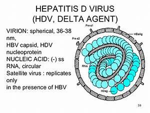 Hepatitis ppt f... Hepatitis D