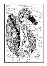 Coloring Duck Zentangle Pages Delicate Adult Colouring Favecrafts Pond Printable Sheets Detailed Colour Birds Cat Detail Books Sheet sketch template
