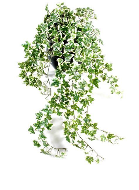 plante grimpante en pot plante grimpante interieur