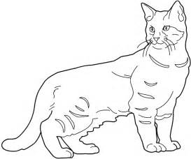 drawings of cats cat drawings cliparts co
