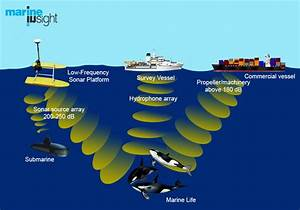 Effects of Noise Pollution from Ships on Marine Life