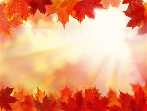 Girly Simple Fall Backgrounds by Maple Leaf With Blurred Sunlight Background Stock Photo 03
