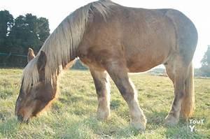 Bon Coin Belge : chevaux de trait a vendre chevaux trait sur enperdresonlapin ~ Gottalentnigeria.com Avis de Voitures