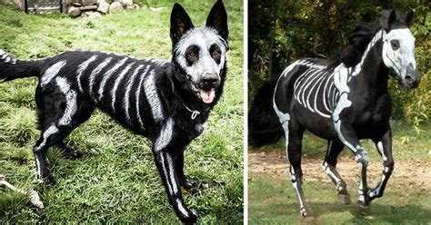 pet owners   toxic face paint  turn  animals