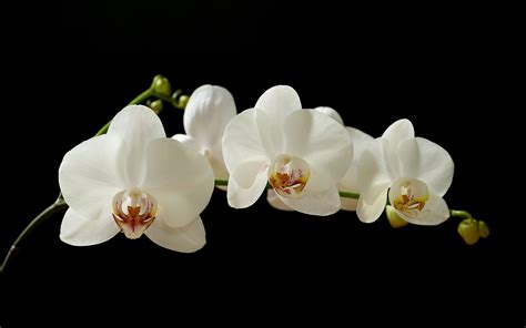 types of orchids orchids residents welfare association different types of orchids