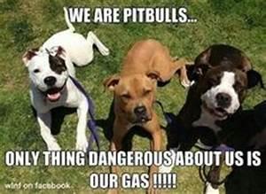 I ♥ Pitbulls on Pinterest   Pitbull, Pit Bull and Pitbulls