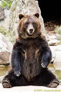 All Galleries  U0026gt  U0026gt  Events  U0026gt  U0026gt  Bronx Zoo 2007  U0026gt  Grizzly Bear