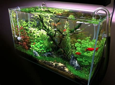 setup aquascape rich s peekaboo setup tropical fish tanks tropical