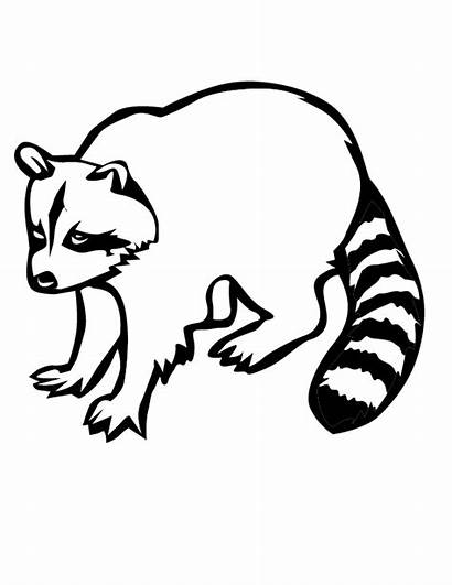 Raccoon Coloring Pages Printable Racoon Drawing Outline