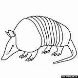 Armadillo Coloring Pages Animals Jungle Armadillos Rainforest Cartoon Texas Thecolor Clipart Nursery Cross Embroidery sketch template