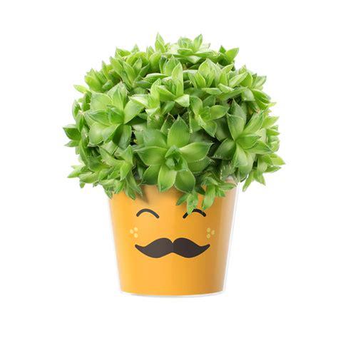 emoji mustache myfacepot