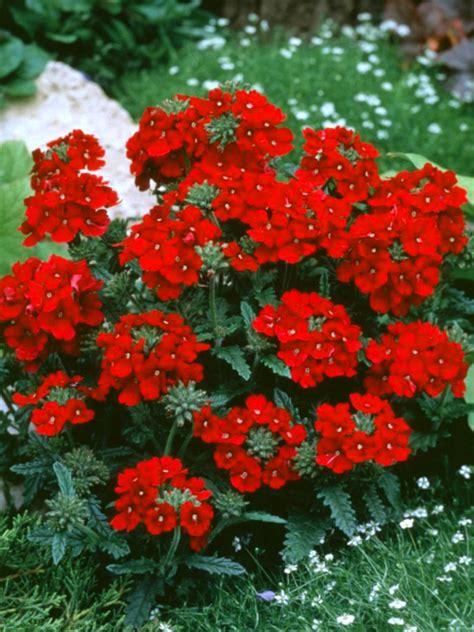 Small Evergreen Perennials Uk  Garden Design Ideas