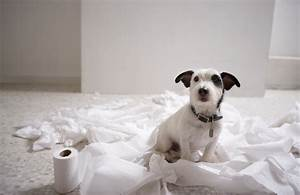 puppy potty training four steps to successfully potty With trouble potty training dog