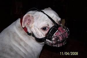 Get English Bulldog Padded Wire Basket Dog Muzzle