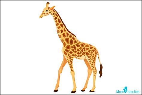draw  giraffe  easy step  step tutorial
