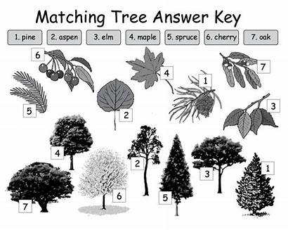 Names Trees Different Types